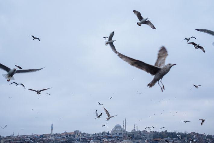 Seagulls fill the sky above Istanbul, Turkey, seen here from the Karakoy neighbourhood.