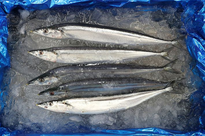 Pacific saury is in short supply off the coast of Japan. The plan toward sustainability includes ...