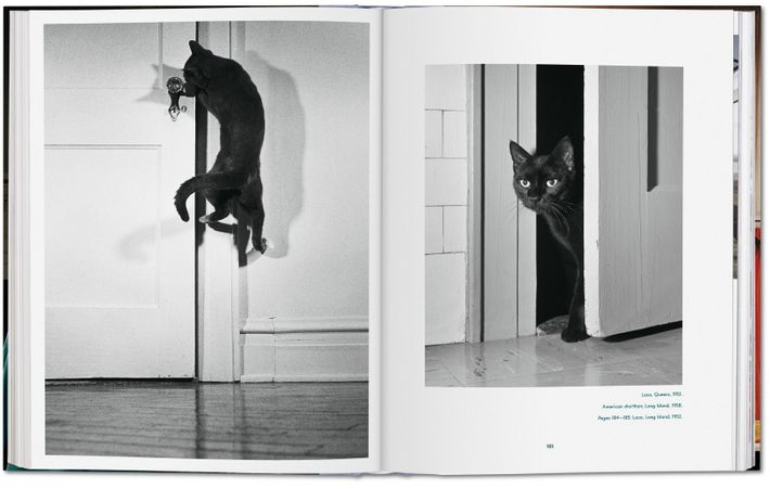 Felines of all forms get a fitting tribute in Walter Chandoha's 2019 photo book Cats.