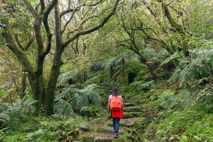 A woman treks through Yangmingshan National Park's subtropical forest. Peaceful areas like this can be a ...