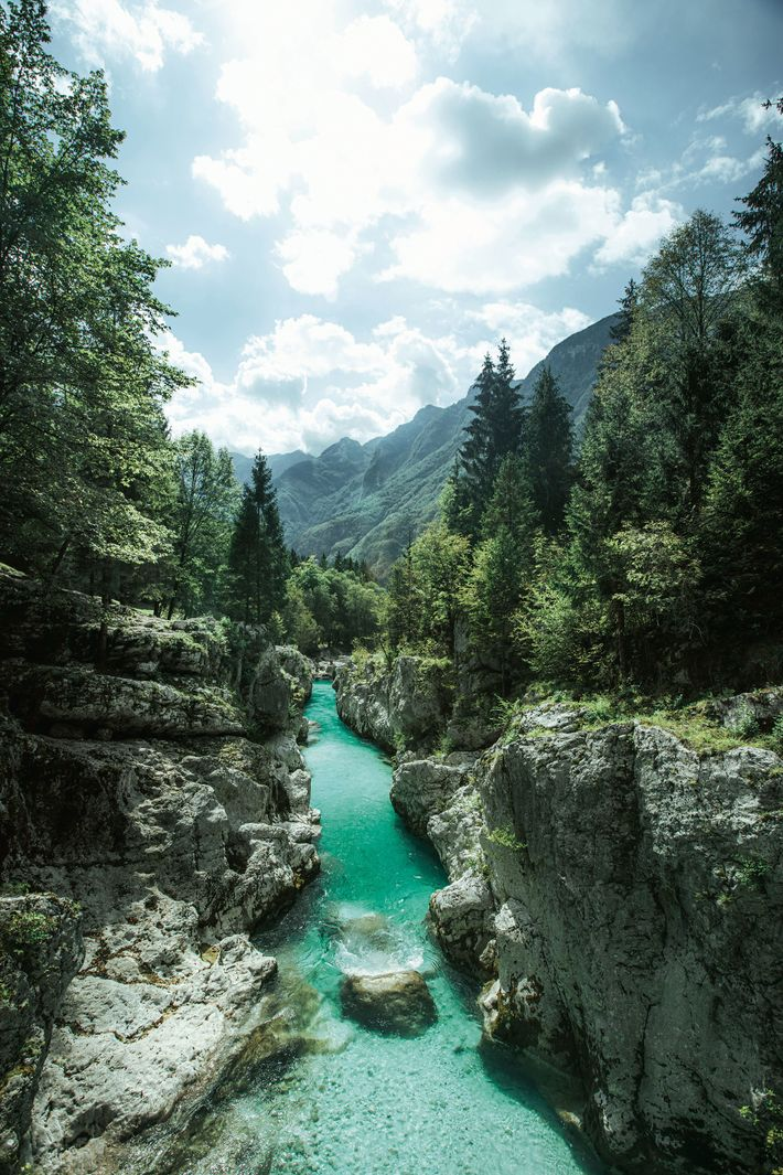 A river flanked by pristine forest in Slovenia.