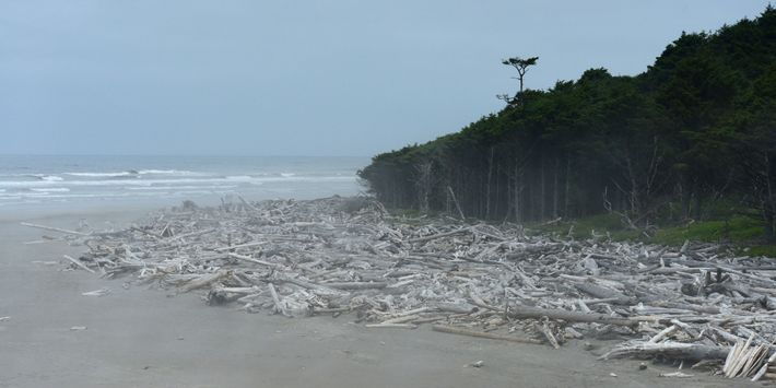 At Washington's Olympic National Park, visitors can revel in nature's soothing sounds. Here, Kalaloch Beach hums ...