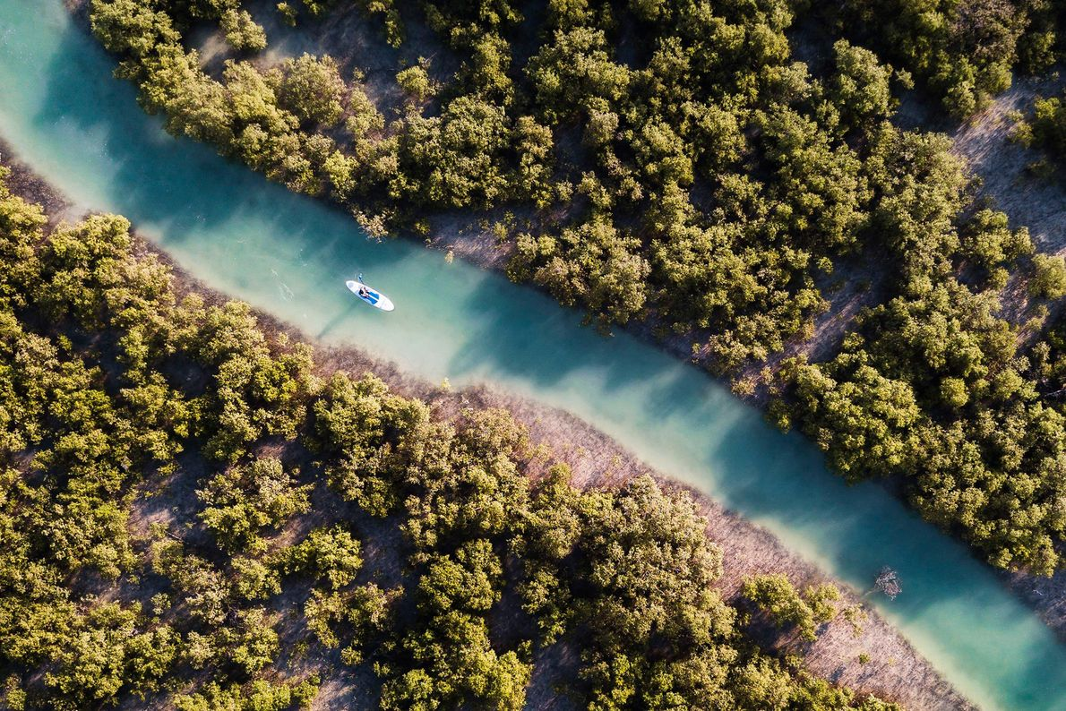 A kayaker glides through the channels of Abu Dhabi's natural mangrove forests.