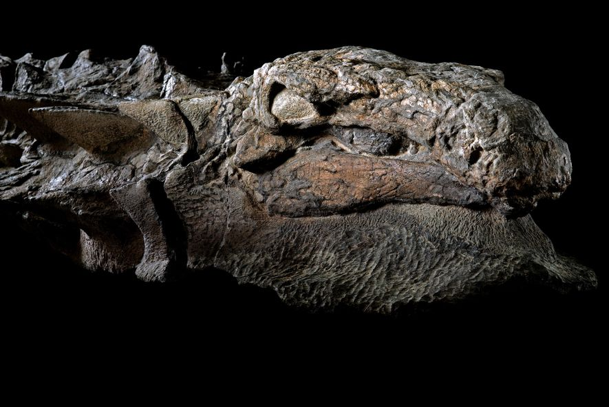 Pictures: This Dinosaur Is the 'Most Impressive Fossil' We've Ever Seen