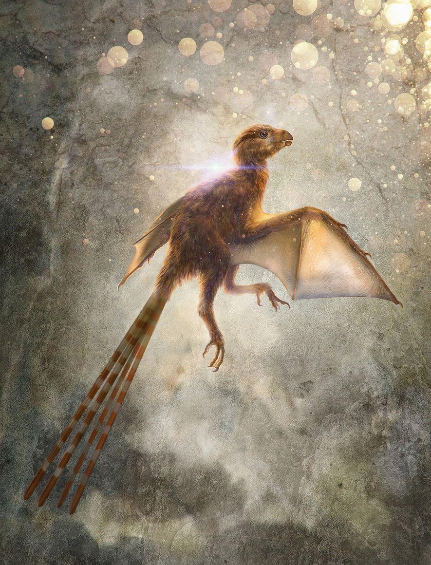 This illustration depicts Ambopteryx longibrachium, a newfound species of nonavian theropod dinosaur that had bat-like membrane ...