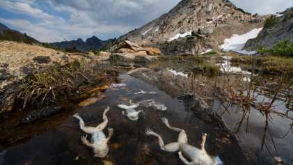 Amphibian 'apocalypse' caused by most destructive pathogen ever