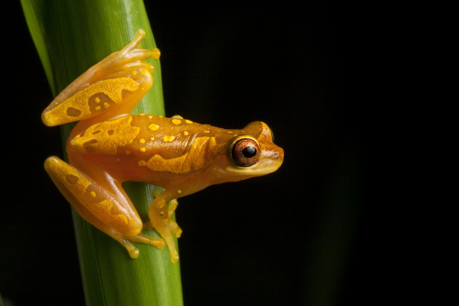 We may know less about the 'amphibian apocalypse' than we thought