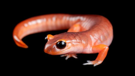 In Pictures: Amazing Amphibians