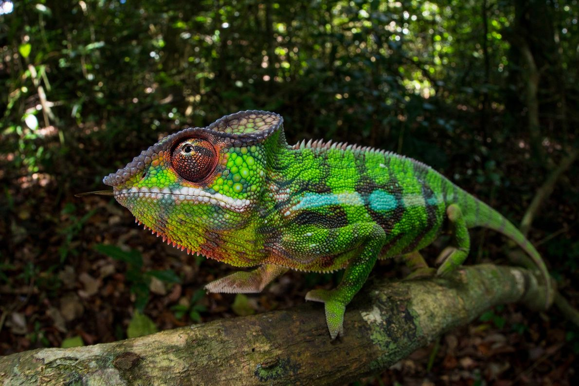 Colour-changing animals, explained