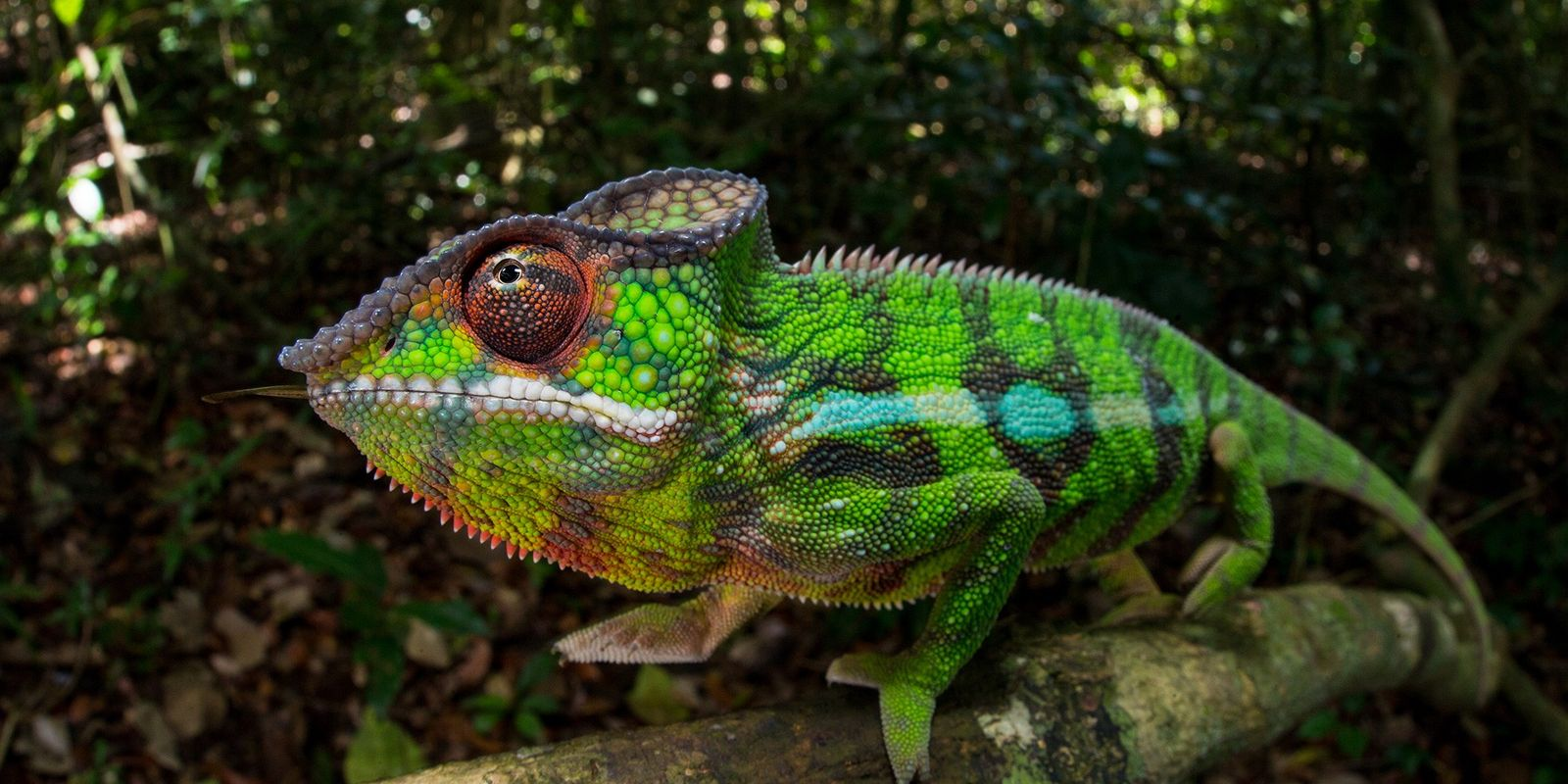How do animals change colour?