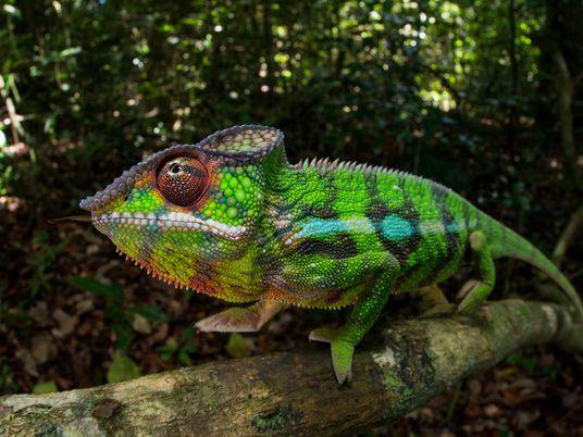 How do animals change colour?