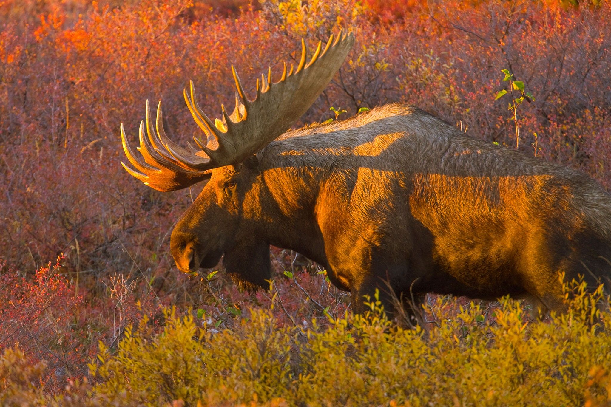 Fascinating ways animals prepare for Autumn | National Geographic