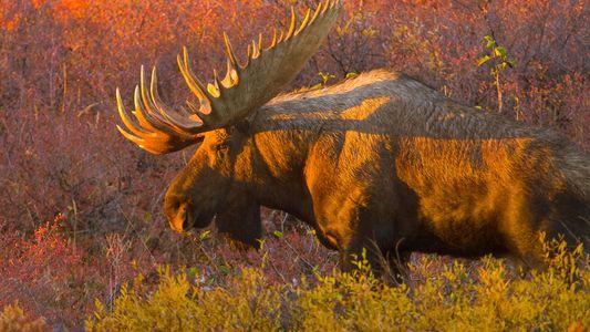 Fascinating ways animals prepare for Autumn