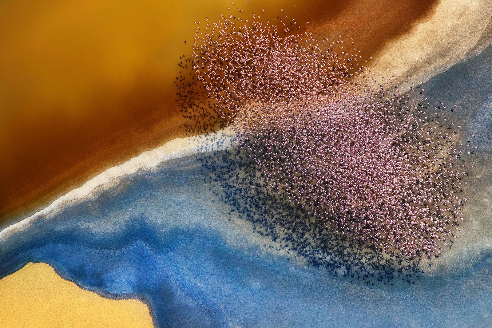 17 Jaw-dropping Photos of Animals From Above