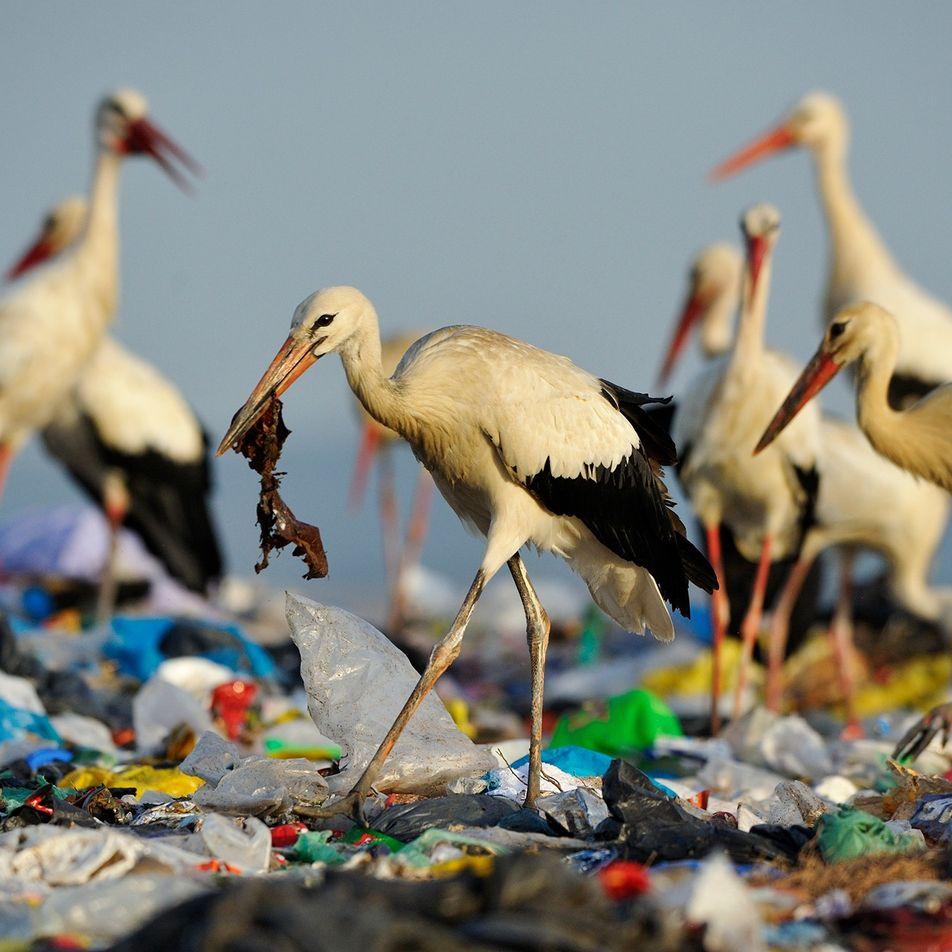 Why do ocean animals eat plastic?