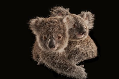 Australian species affected by wildfire