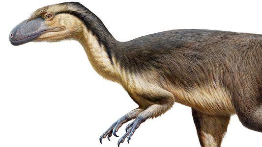 Fossil dinosaur feathers found near the South Pole