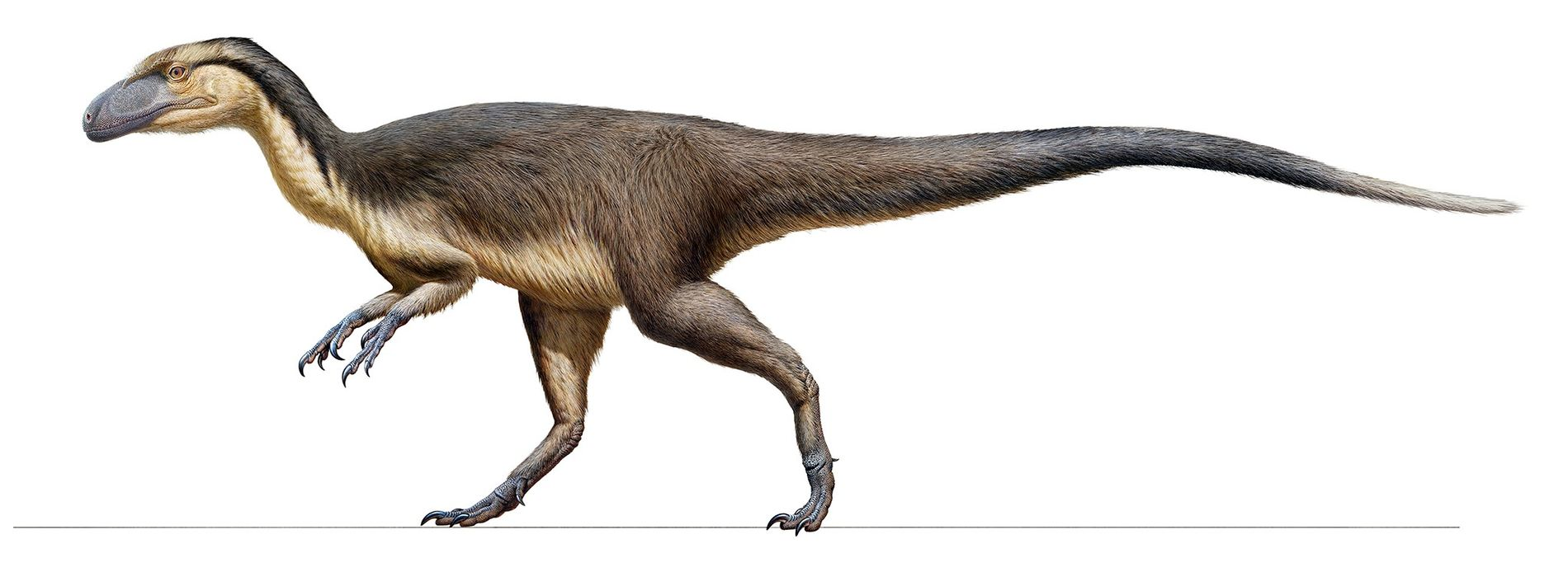 A cache of fossilised feathers found in Australia provides solid evidence that small carnivorous dinosaurs, like ...