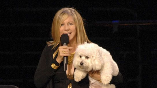 """Barbara Streisand holds her pet dog """"Sammie."""" When Sammie died, the singer and actress had two ..."""