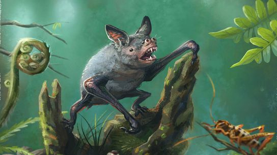 Artist's impression of a New Zealand burrowing bat, Mystacina robusta, that went extinct in the 1960s. ...
