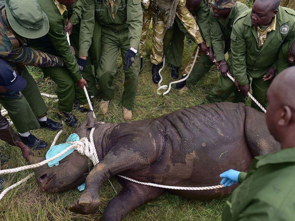 Deaths of 8 Rare Rhinos in Kenya Is 'Major Step Back'