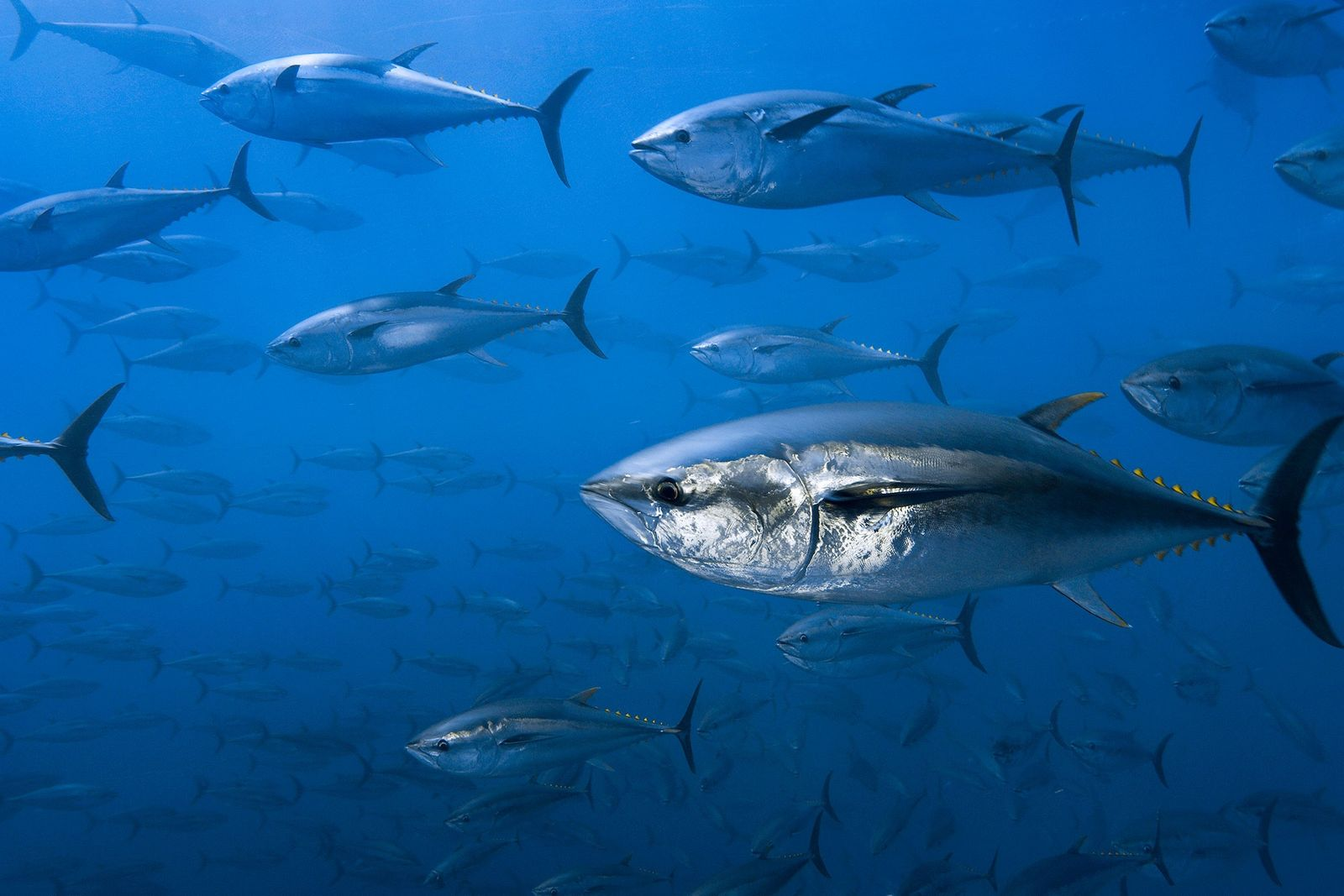 Is the Tuna You Eat From a Criminal Source?