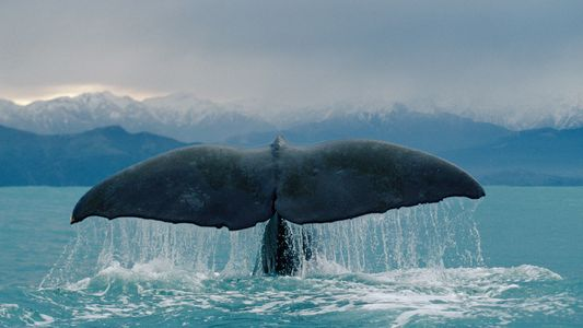 Can Today's Whale Species Survive the Age of Humans?