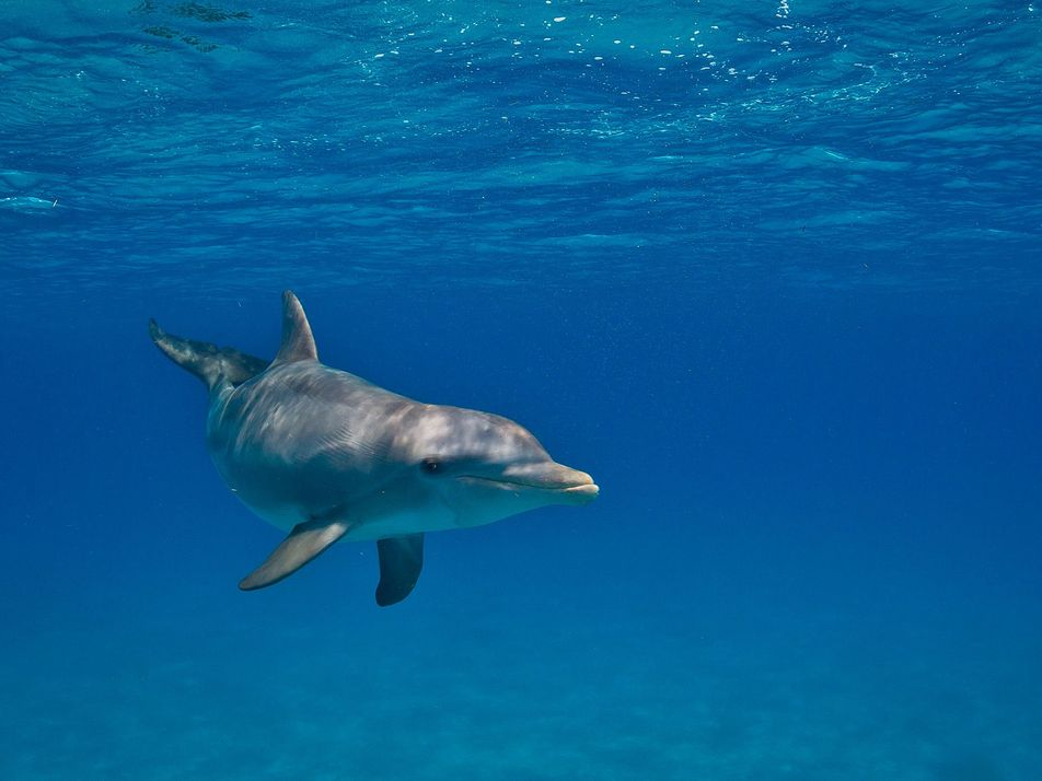 Chemicals From Plastics, Cosmetics Found in Wild Dolphins
