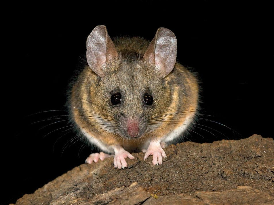 """""""Love rat!"""" Mice 'argue' about infidelity in ultrasound"""
