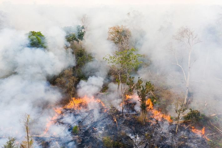 Near the Phnom Tnout Phnom Pok Wildlife Sanctuary, in northern Cambodia, land is burned by farmers, ...