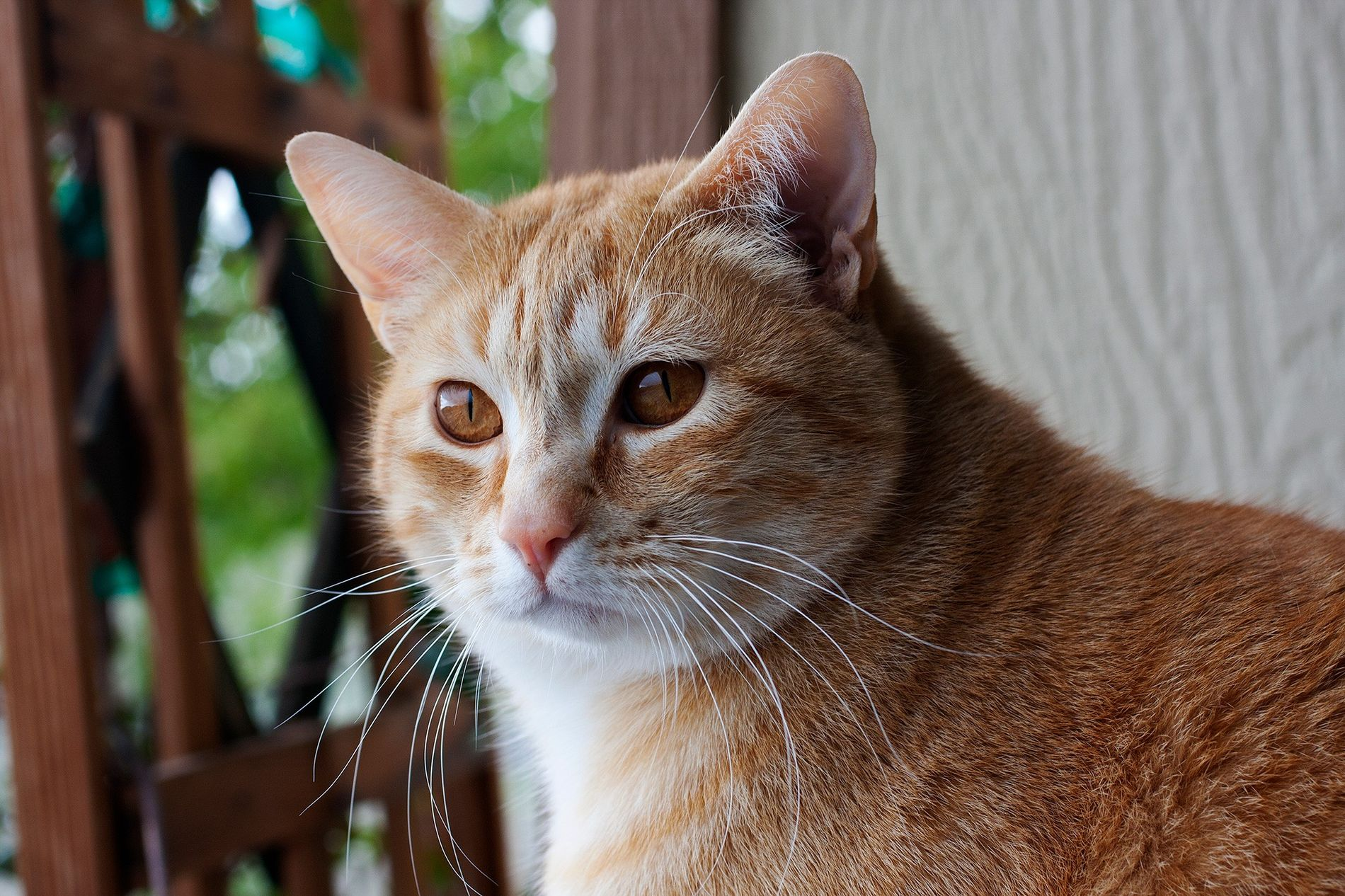 Cats associate their names with rewards, such as food and petting.
