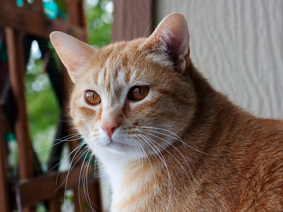 Cats know their names—why it's harder for them than dogs