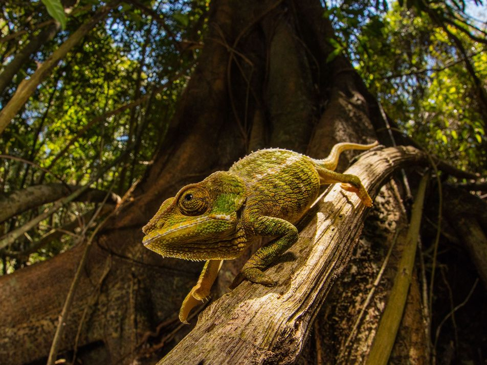 New 'smart' skin changes colour using a trick learned from chameleons