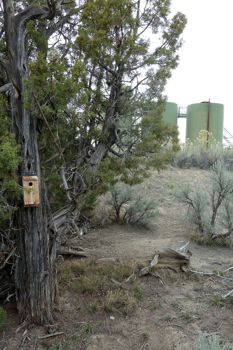 Some of the nestboxes were placed close to the oil and gas operations, as pictured above.