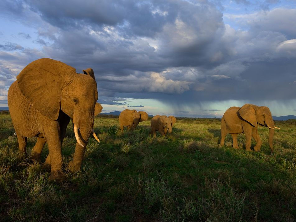 In China, Ivory Seems to Be Losing Its Appeal