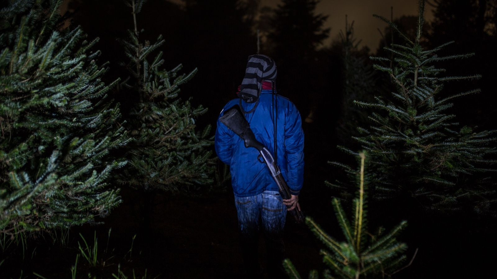 To protect the endangered Guatemalan fir, or pinabete, from poachers at Christmastime, armed guards like Felipe ...
