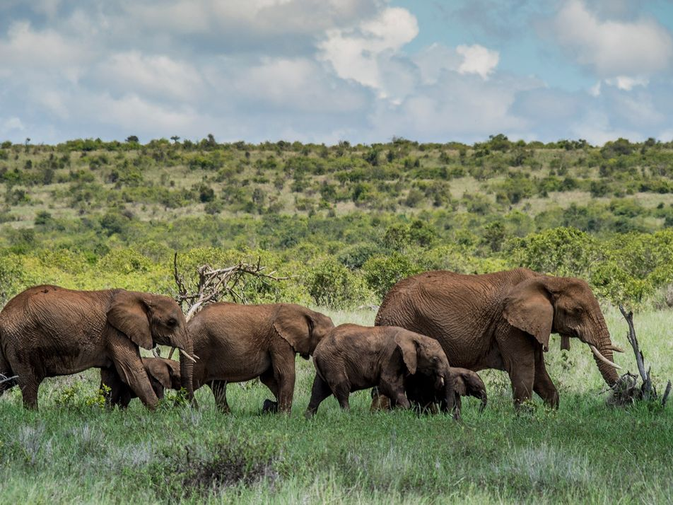 Poaching threats loom as wildlife safaris put on hold due to COVID-19