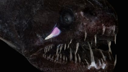 How Deep-Sea Fish Are So Exceptionally Black