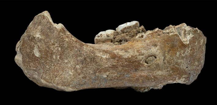 The newly described jawbone, known as the Xiahe mandible after the county in China where it ...