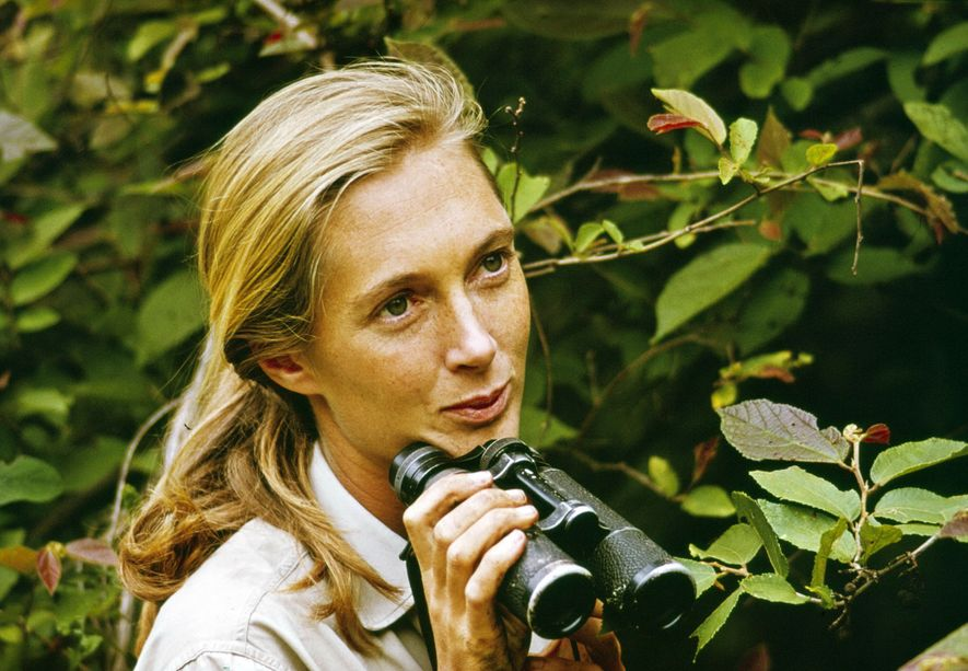 KIGOMA - DECEMBER 22: Jane Goodall appears in the television special 'Miss Goodall and the World of Chimpanzees' originally broadcast on CBS, Wednesday, December 22, 1965. Location, Gombe Stream National Park, Tanzania. (Photo by CBS via Getty Images)