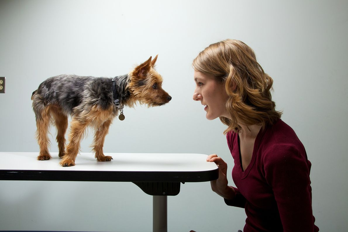 Do anxious owners make for anxious dogs?