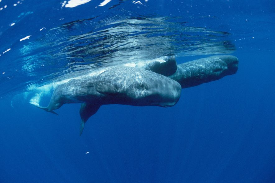 Earthquakes can make it harder for whales to find food, first-ever study says