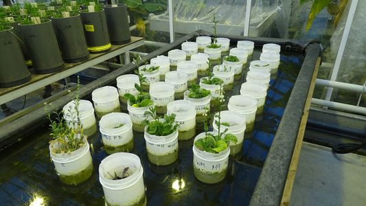 Earthworms Reproduce in Simulated Mars Soil