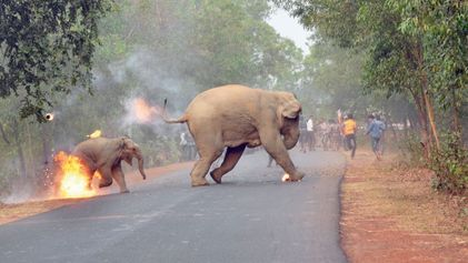 Shocking Photo Shows Elephants Fleeing a Fire-Wielding Mob