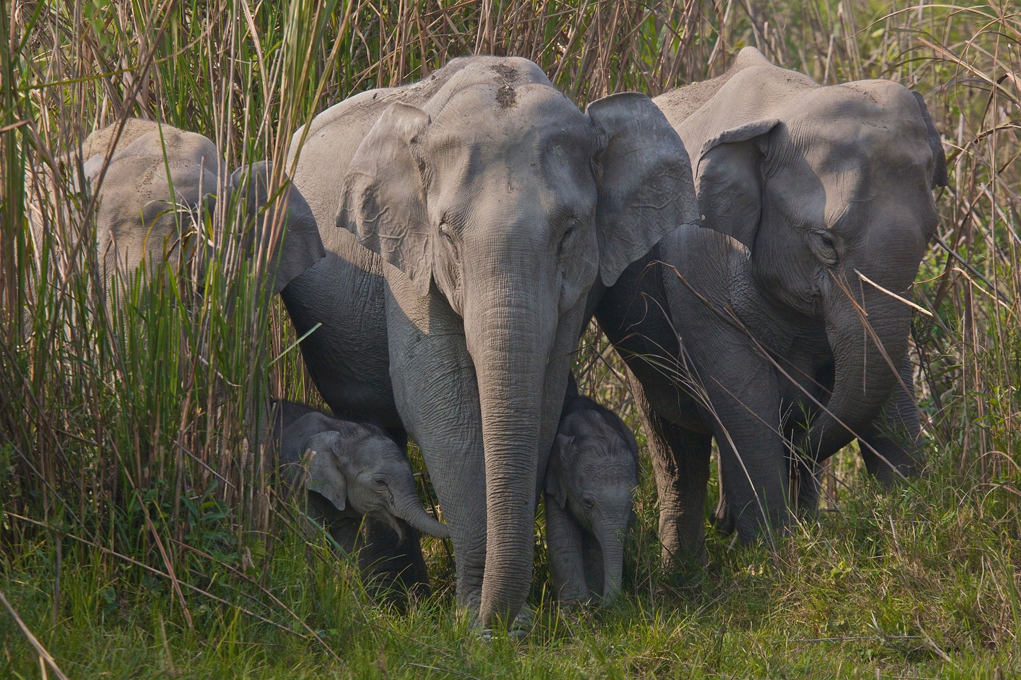 Elephant skin sales growing rapidly