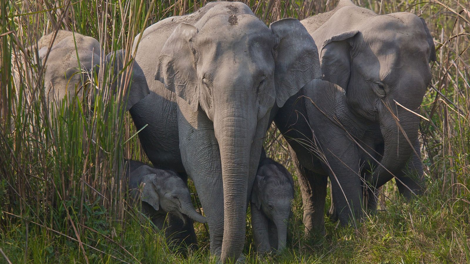 The illegal trade in elephant skins for decorative beads and medicinal powders has spread rapidly since ...