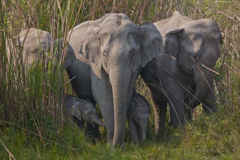 Elephant skin sales growing rapidly