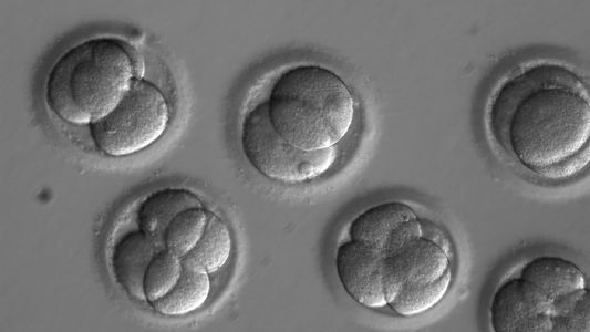 First Human Embryos 'Edited' — Get the Facts