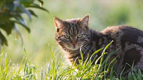 They may look cute, but cats' killer instinct may be driving down whole populations of reptiles, ...