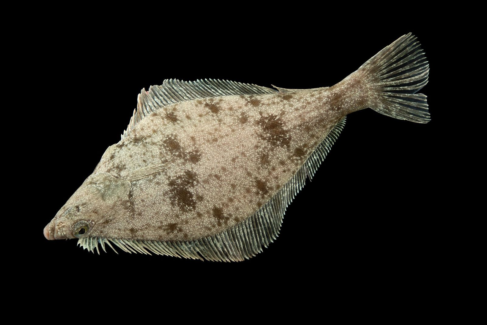 These Freaky Fish Use Their Fins To 'Walk' Across The Seafloor
